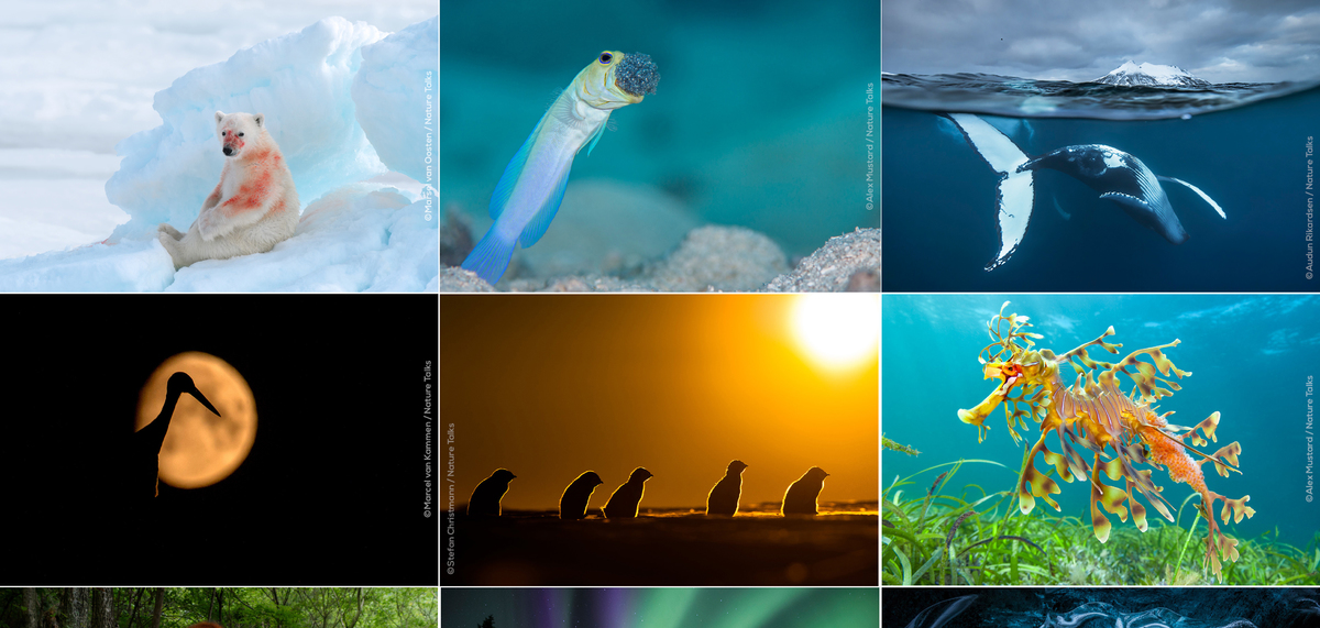 Nature Talks Photo Festival Online